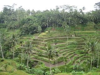 Bali | by Phalinn Ooi