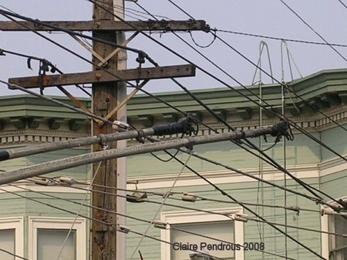 Wires and trolley-heads.   Trolleybus booms on their running ... on