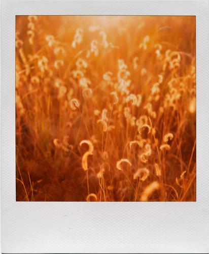 sunset film grass polaroid bokeh polaroid600 magichour tijeras inmyyard polaroidweek slr690 roidweek2008 polaroidweek2008 stream:timeline=linear