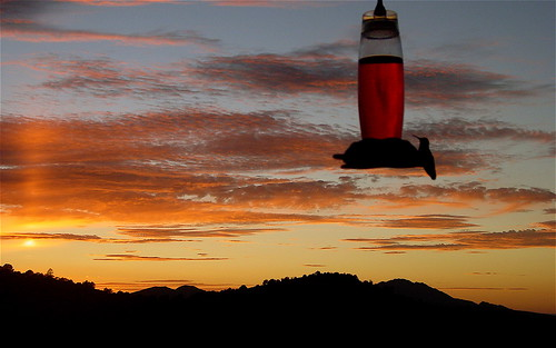 sunset arizona hummingbirds prescott