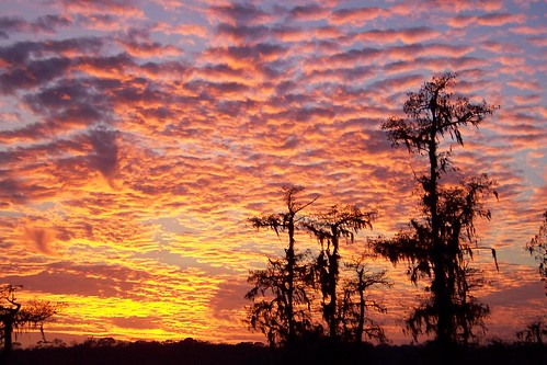 pink sunset sky orange cloud tree silhouette yellow landscape evening purple scenic swamp 2008 lakemartin 6783 z712is roygvbiv