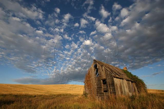 Spacious Skies and Amber Waves of Grain