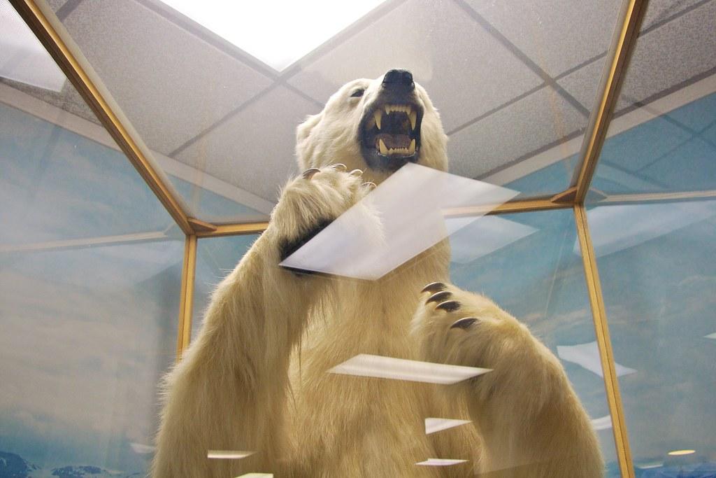 Polar Bear At Juneau Airport Our Trip To Alaska Got Off
