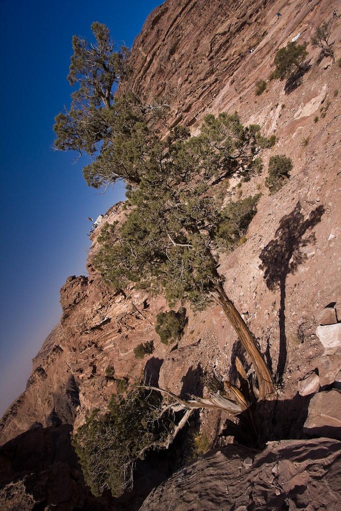 tree of Petra III by mouzhik