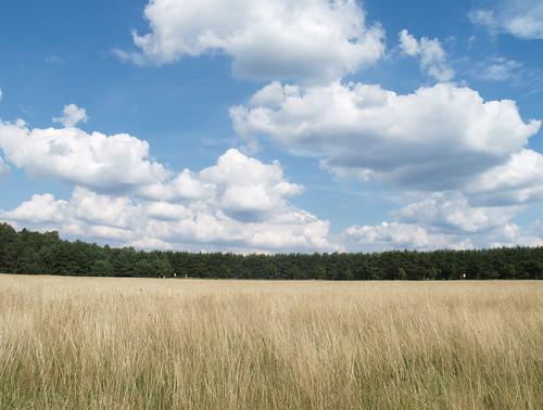 Senne near Paderborn #6 | by palestrina55