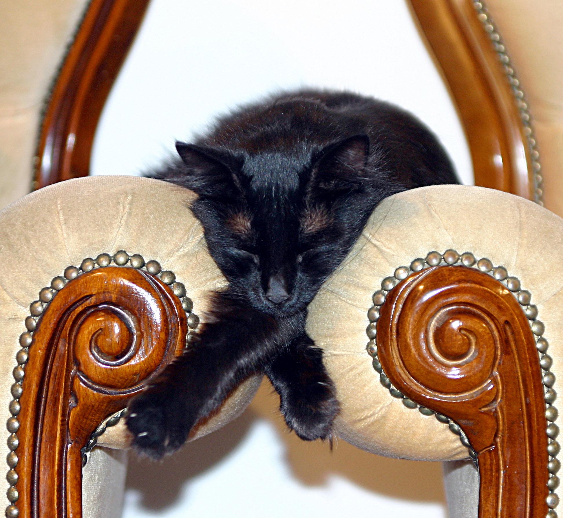 Sleeping between armchairs