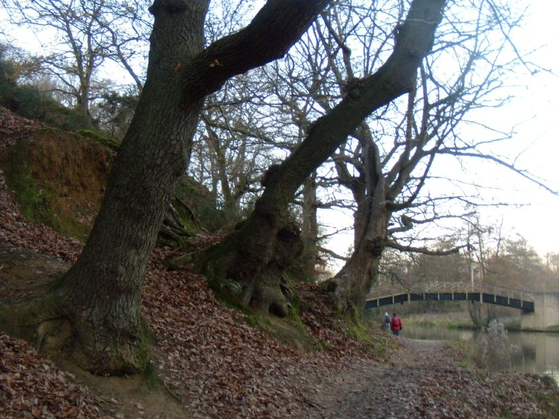 Trees by the Wey Guildford Circular