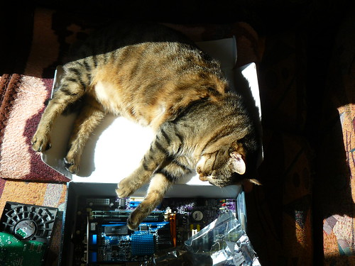 Cat with Computer MotherBoard | by KLMircea