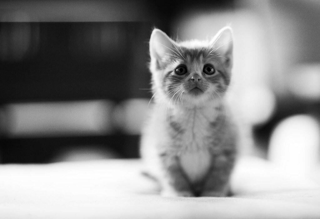 a cute kitten is so popularrr by Lastexit