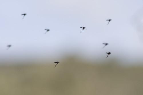 escuadrón de mosquitos