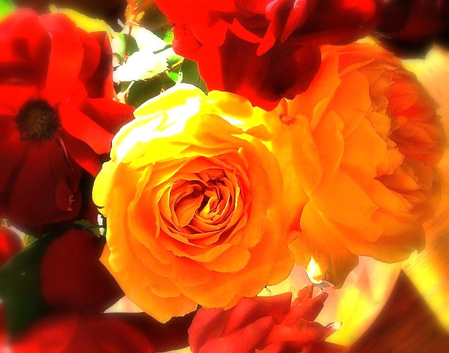 Mix of roses