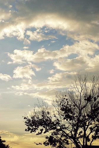 sunset tree fall silhouette clouds landscape seasons florida tampaflorida apollobeach notcroppedsuckaaa eastbayhighschool