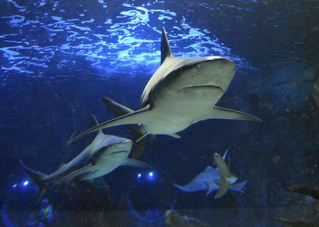 New Port Aquarium - Cincinnati