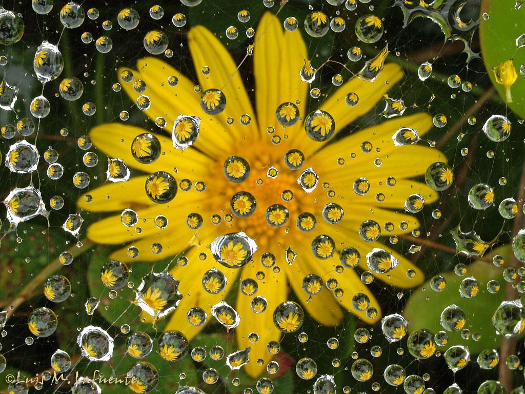 Tela de araña en flor - Web spider in flower by BIELE - Asturias en Imágenes