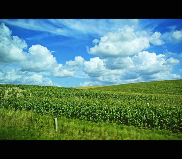Salisbury's countryside 2