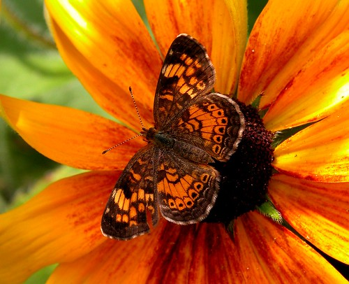 park flowers red orange brown flower macro nature closeup fauna butterfly catchycolors garden photography photo flora colorful pix close moth pic msoller