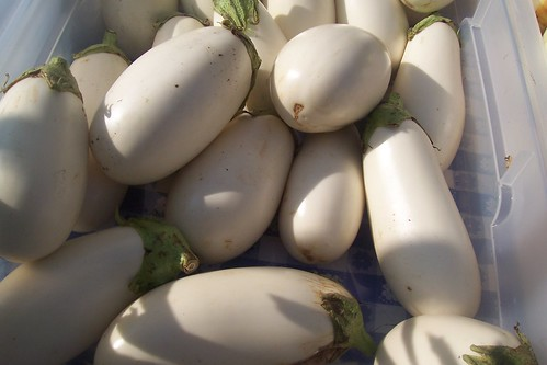 white eggplant | by Rochelle Hartman