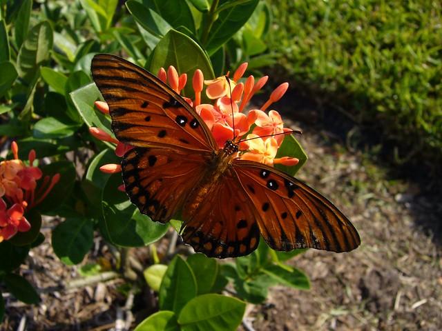 Backyard Nectar Hunt