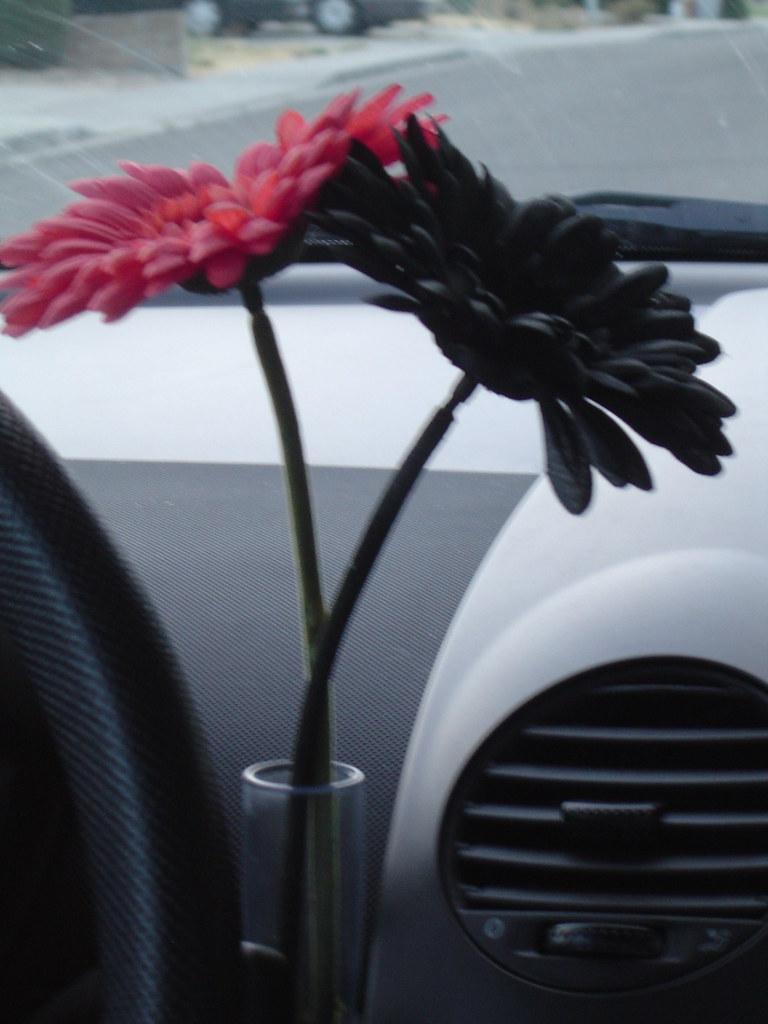 by Batgerl What\u0027s in my VW Beetle vase? | by Batgerl & What\u0027s in my VW Beetle vase? | These two flowers. | Michelle Morris ...