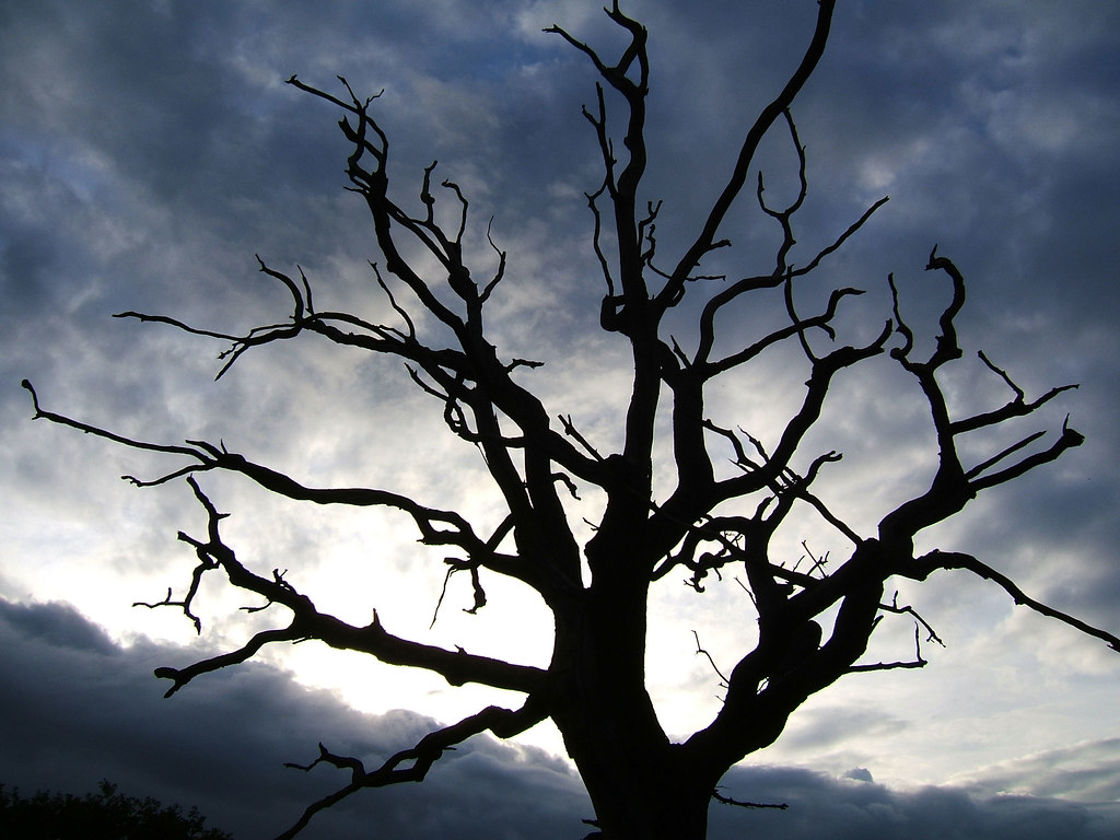 Image result for spooky tree