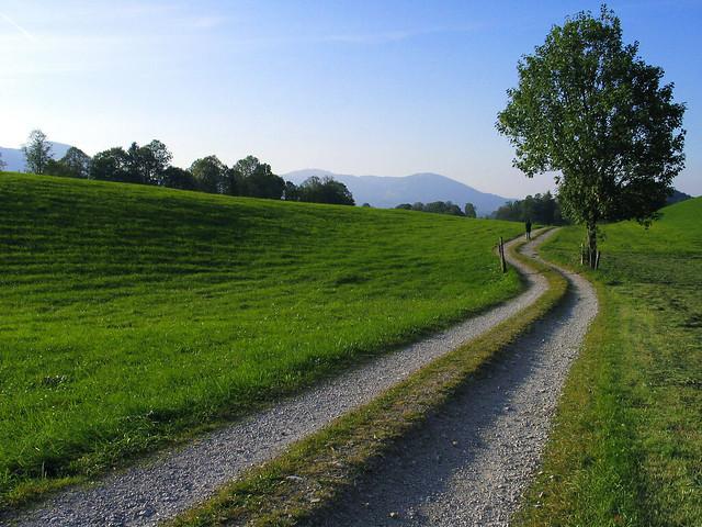 Bayern Field Track Landscape Tree