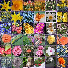 Flower Set Mosaic | by Dave - aka Emptybelly