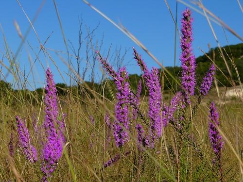 flowers plants nature landscape hood forthood fthood clintking