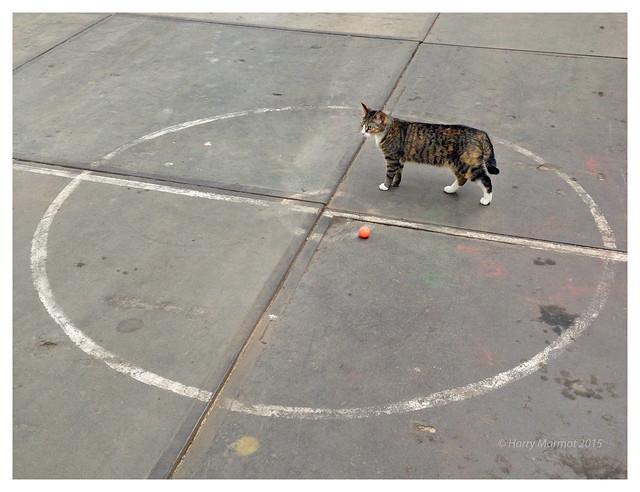 It's not my ball!