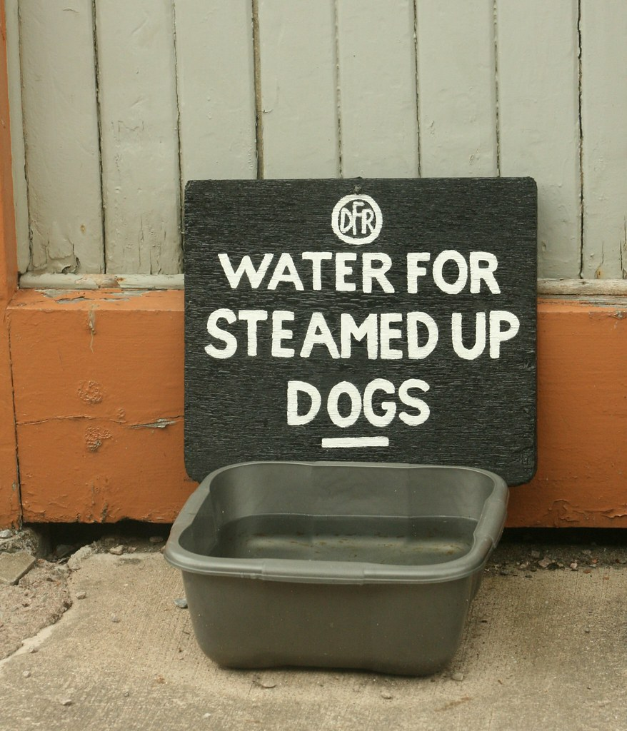 Water for steamed up dogs