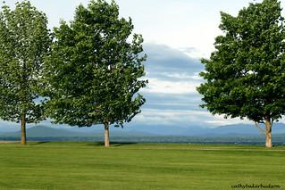 shelburne inn trees