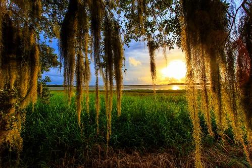 sunset us unitedstates florida spanishmoss sarasota florida2015 unitedstateslakemyakka