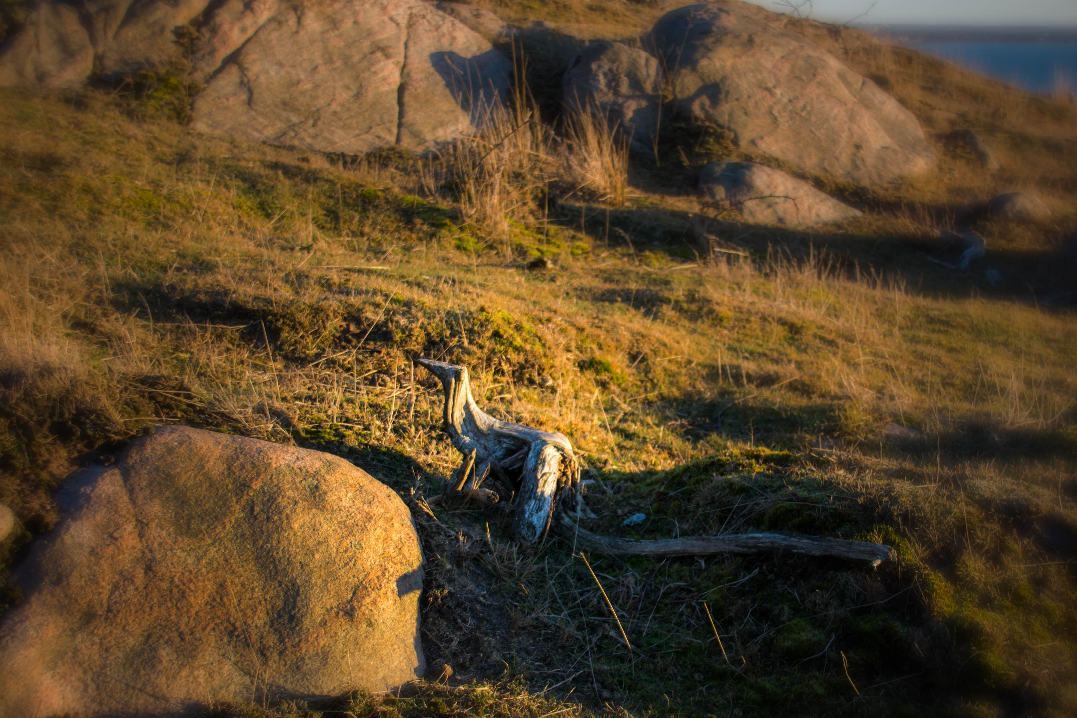 20170115 Kullaberg cold but sunny winter afternoon.jpg