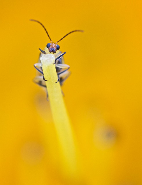 Bug Pose