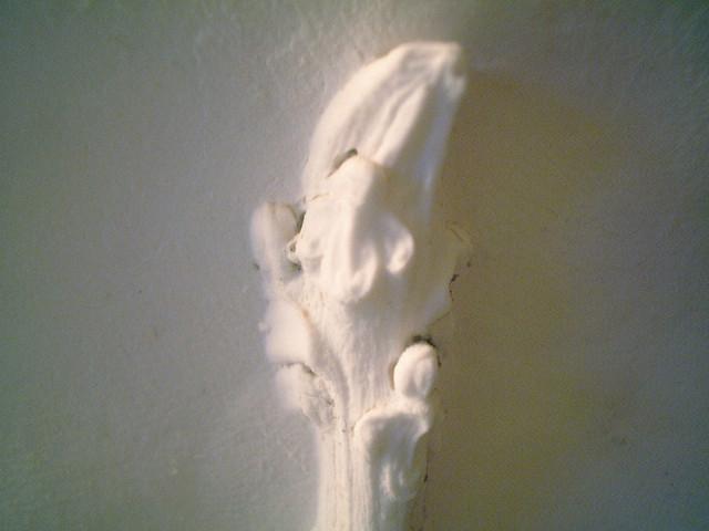 冬芽の石膏型取