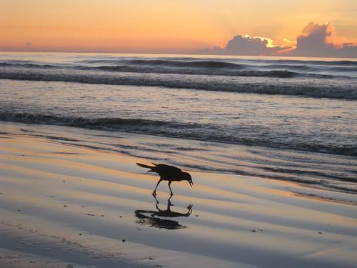 ocean favorite bird beach animals sunrise florida cocoabeach damniwishidtakenthat