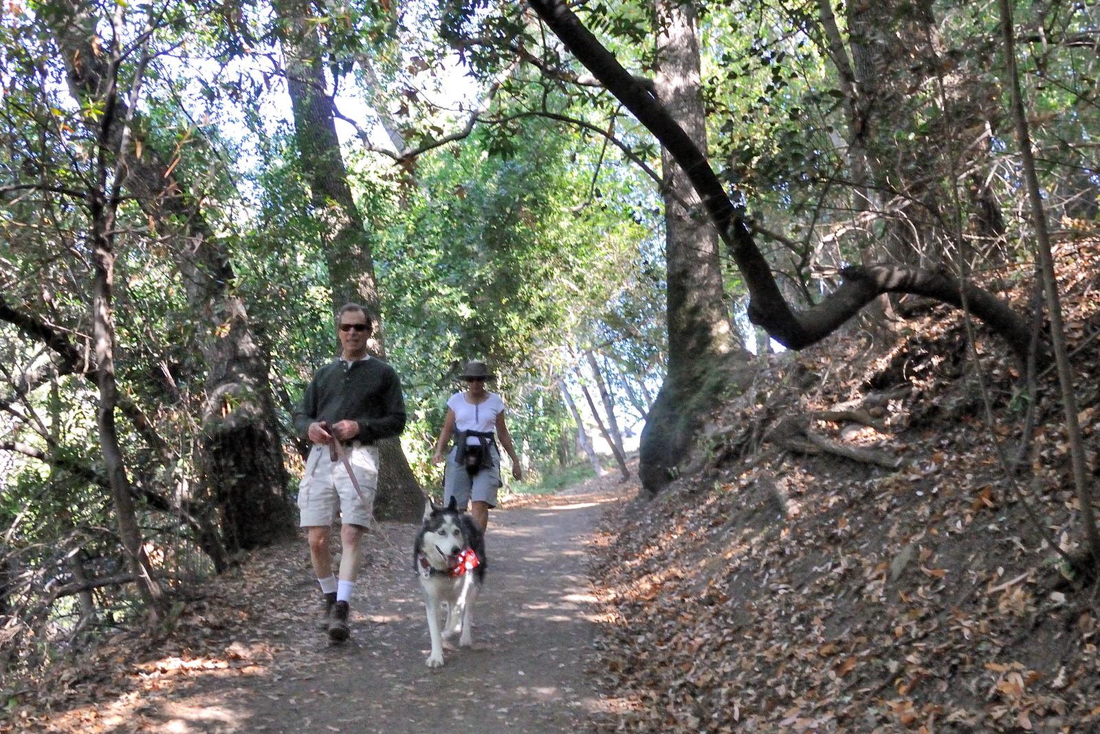 Walking the Dog on the Los Gatos Creek Trail