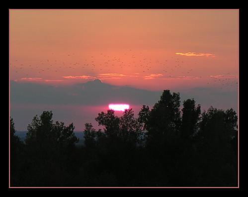 sunset ohio orange sun birds partial belfountaine