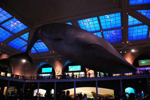 Blue Whale | by VSmithUK