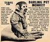 Darling Pet Monkey