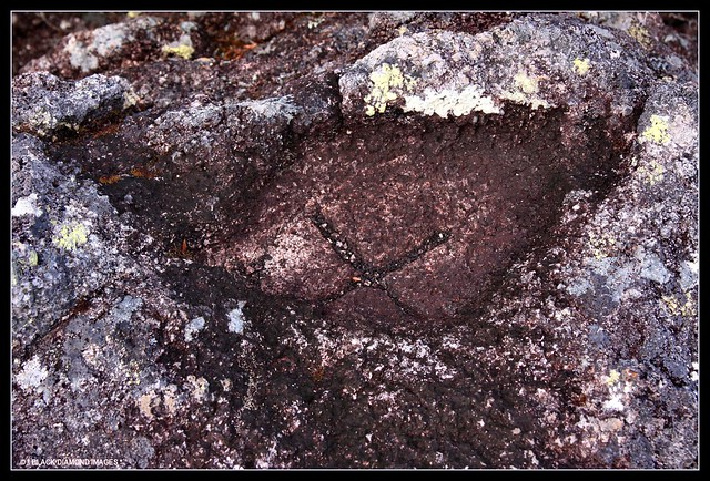 X Marks The Spot  -  Top Point Blackbutt Plateau - Nullum State Forest, Kooyum Range, 12.7.2008