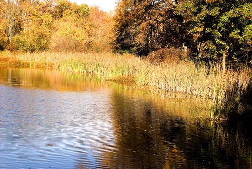 blue fall nature water gold nikon d40 valkill d40x