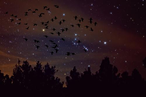 sky nature composite night photoshop manipulated dark stars evening geese nikon colorado astrophotography orion co astronomy photoart constellation afterdark lightpollution d300 wetmountains clff impressedbeauty aplusphoto oraclex lesamisdupetitprince