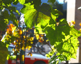 Downtown Grapes | by the_tahoe_guy