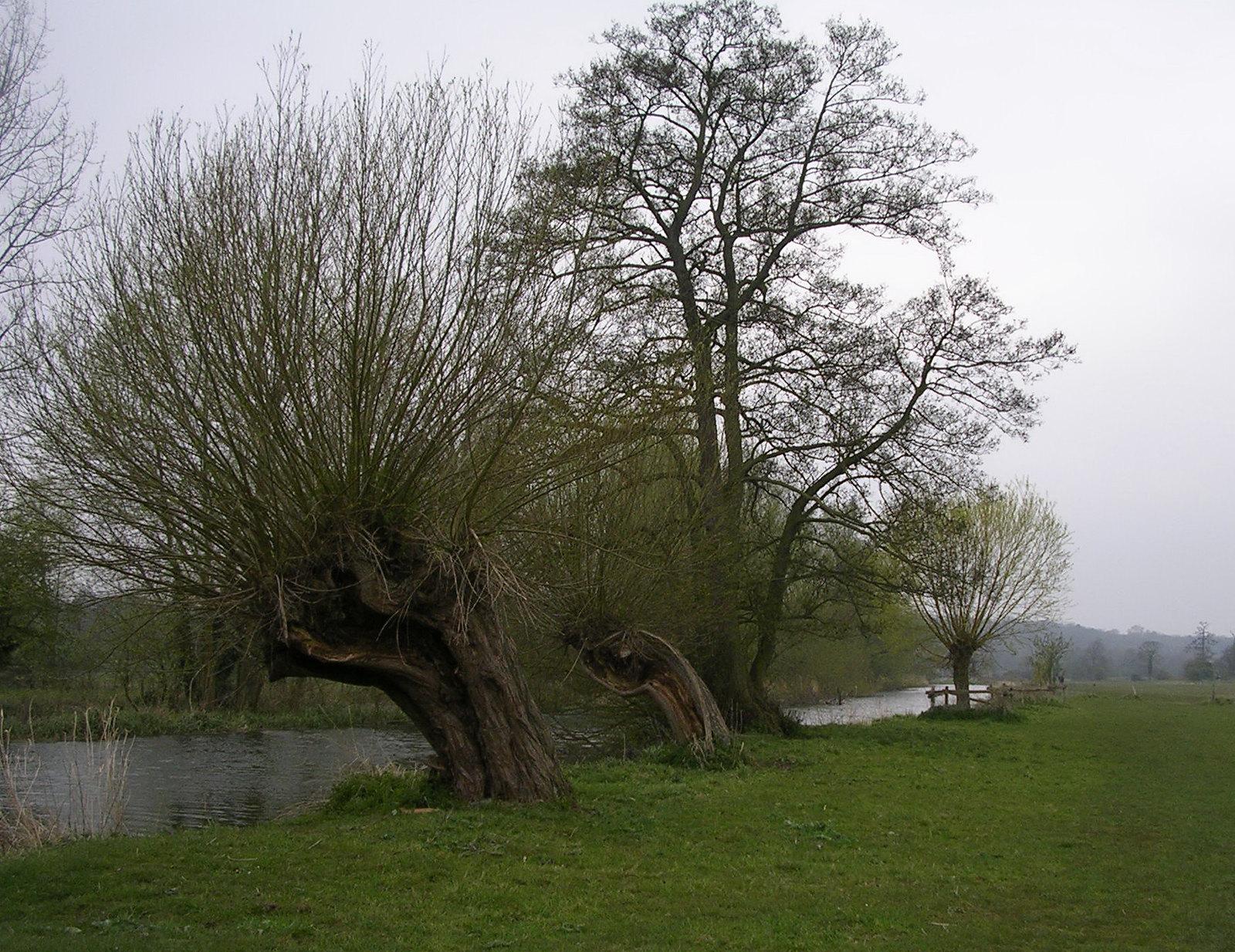 Along the Stour Manningtree circular.