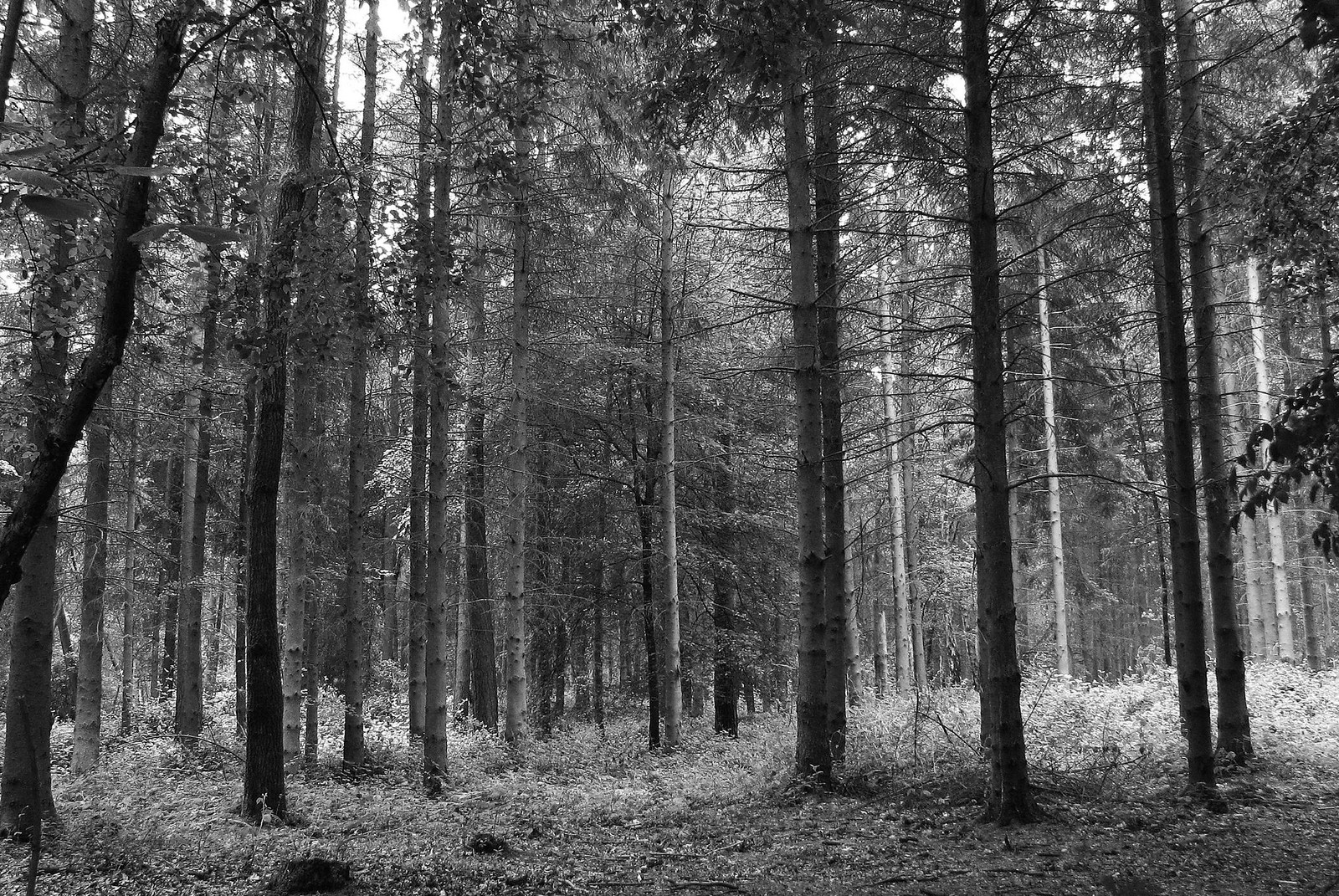 Silence A peaceful moment in oxfordshire wood