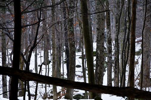 winter snow forest geotagged pennsylvania pa hdr honesdale mudpig stevekelley honesdalepa himalayaninstitute