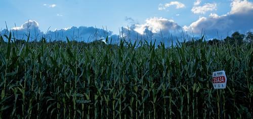 sunset sky clouds cornfield centralpennsylvania