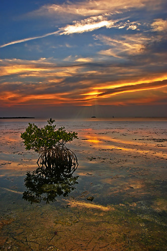 sunset orange water florida dusk mangroves floridakeys tavernier bigmomma blueribbonwinner supershot specnature anawesomeshot impressedbeauty superaplus aplusphoto theunforgettablepictures platinumheartaward goldstaraward friendlychallenge absolutelystunningscapes thechallengefactory