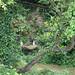 garden_sink&monks