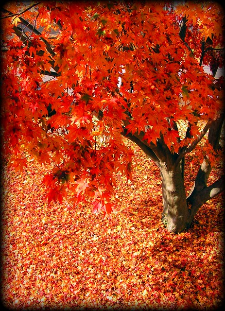 Now You See Why Autumn is My Favorite Season?